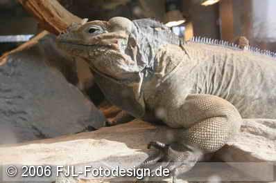 Kölner Zoo und Flora im Februar 2006