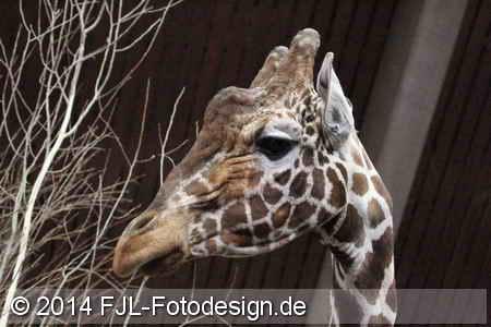 Kölner Zoo am 5. März 2014