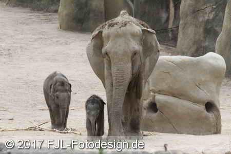 Kölner Zoo am 18.06.2017