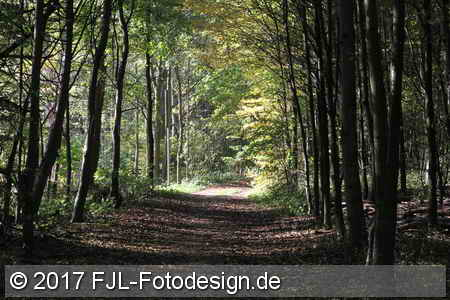 Herbstspaziergang Stammheim/Flittard