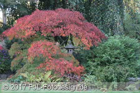 Japanischer Garten im Herbst 2017