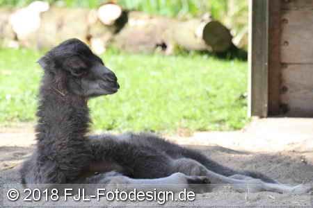 Kölner Zoo im April 2018