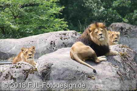 Wuppertaler Zoo 2018