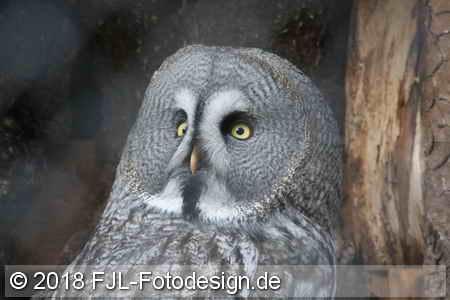 Greifvogelschutzstation Gut Leidenhausen 2018