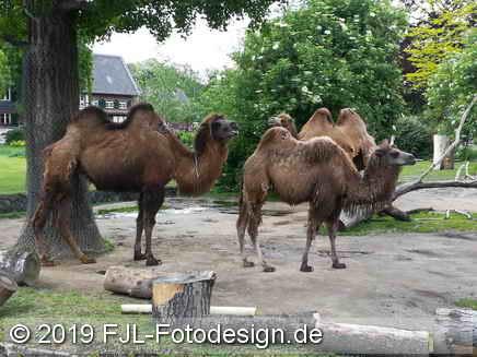 Kölner Zoo im Mai 2019
