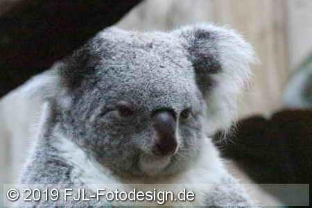 Duisburger Zoo 2019