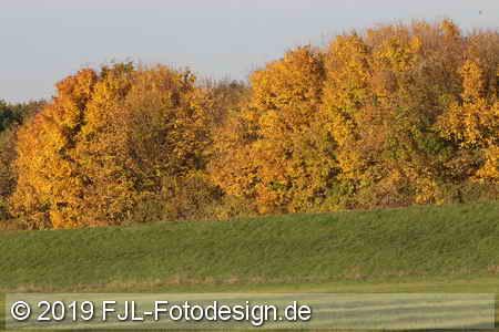 Stammheimer Schlosspark und Flittarder Rheinaue im Herbst 2019
