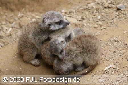 Zoo Dortmund 2020