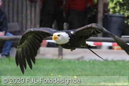 Greifvogelstation & Wildfreigehege Hellenthal